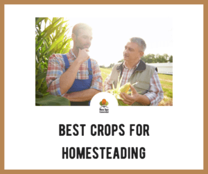 Best Crops for Homesteading