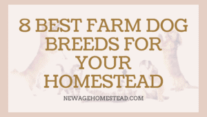Best Farm Breed Dogs for Homestead