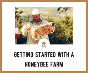 Getting Started with a Honey Bee Farm on a Homestead
