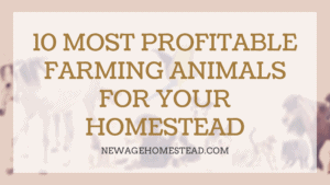 Most Profitable Farming Animals for Homestead