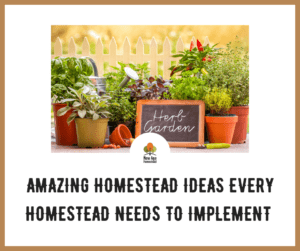 amazing homestead ideas needs to implement