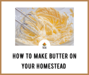 How to make butter on your homestead
